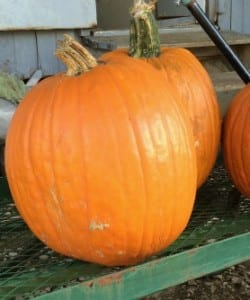 How Much Does a Pumpkin Cost? {FREE Algebra Lesson!}