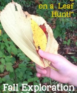 """We're Going on a Leaf Hunt!"" Fall Exploration Activity"