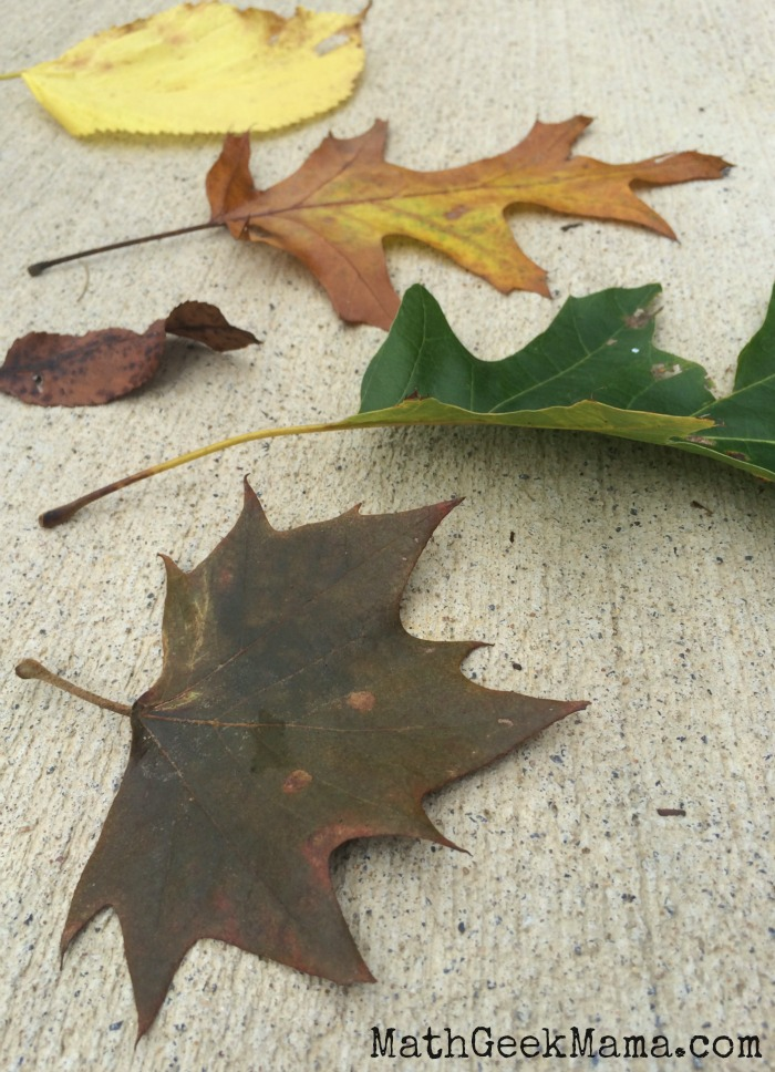 I love this super simple fall activity for kids based on a fun children's book! The possibilities are endless when you go on a leaf hunt!