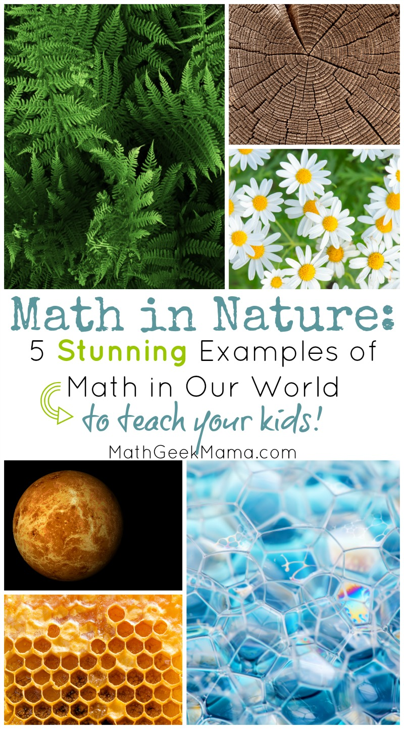 Math In Nature 5 Stunning Ways We See Math In The World